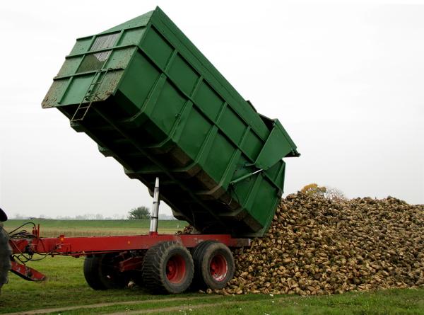 Bild: © panthermedia.net / Rosemarie Bolecke - Bioethanol wird unter anderem aus Zuckerrüben gewonnen